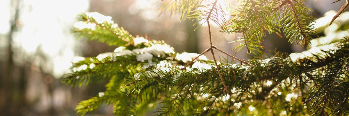 Tillägg till rutin och vägledning för jul- nyår- och trettonhelgen